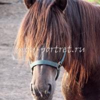 Как нарисовать лошадь — рисуем морду