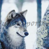Рисуем животных поэтапно. Волк и заяц.
