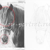 Как развить навыки рисования