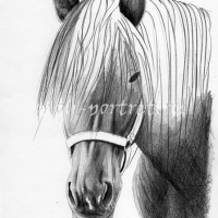 Как нарисовать лошадь — закрашиваем гриву
