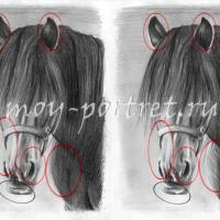 Как нарисовать лошадь — добавляем детали
